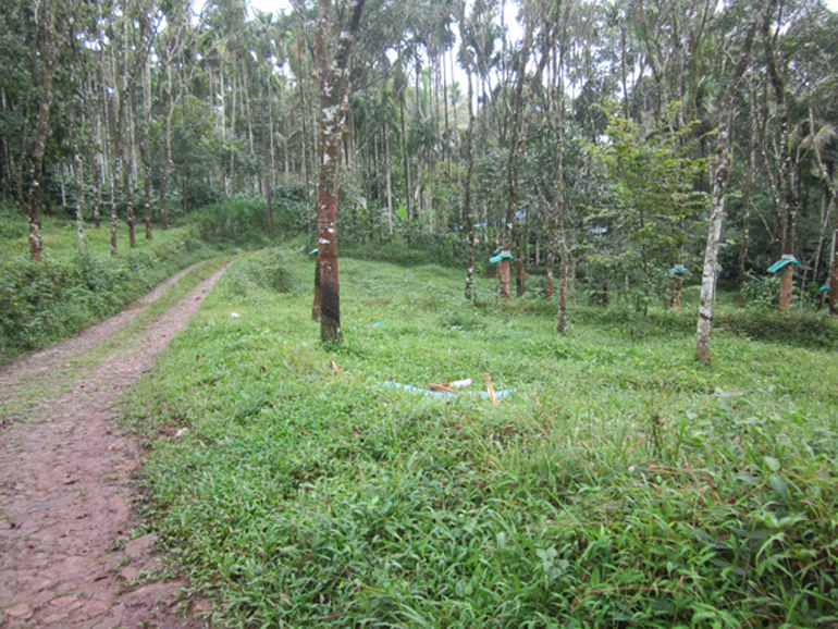 Land for sale at Wynad Dist.