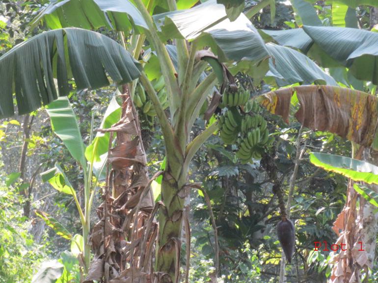 Land for sale Near Punalur – Muvattupuzha Road