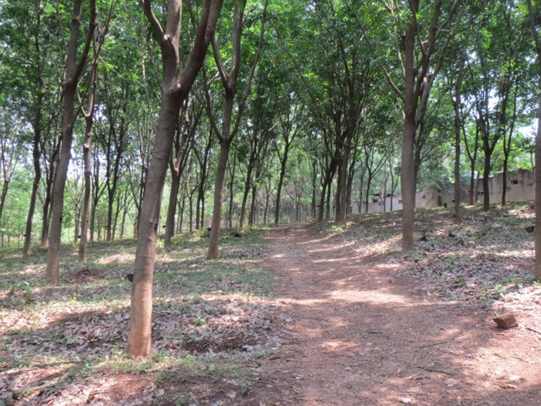 LAND FOR SALE AT PALAKKAD