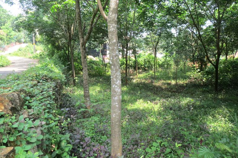 Land for sale at Iddukki dist.