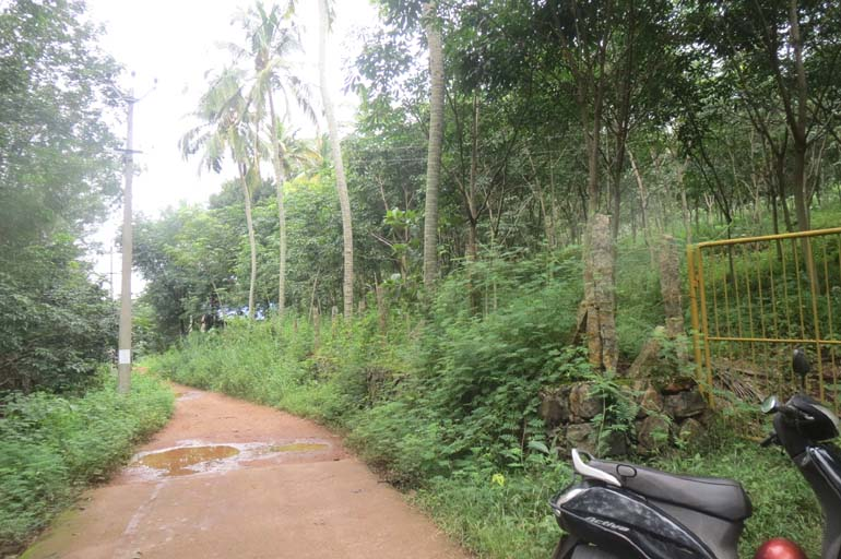 Rubber estate for sale at Trivandrum