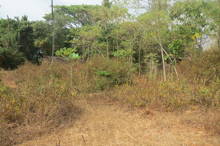 The elevated  commercial land with 41 cents  near Primary Health Centre, Trikkur in Trichur District