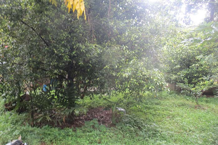 LAND AND HOUSE FOR SALE AT KODAKARA, THRISSUR