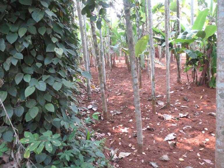 Land House for sale at Thrissur